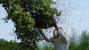 Tarım İlacı Arıları Öldürdü, Verim Düştü