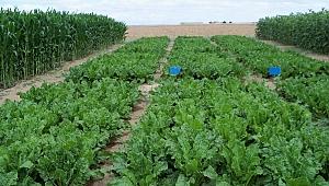 Sağlıklı Toplumlar İçin Organik Tarım Desteklenmeli