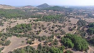 Ekolojik Ortak Yaşam Alanı Olivelo İçin Başvurular Başladı