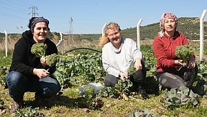 Aliağalı Kadın Çiftçilerden İlk Hasat