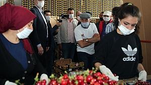 İzmir'in Kirazı İmeceyle Toplanıyor