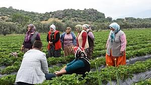 Menemen'de Tıbbı Bitkiler Üretiliyor