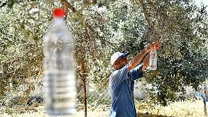 Tire'de Zeytin Sineğine Karşı Mücadele Başlatıldı
