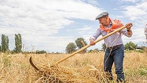 İzmir'de Karakılçık Buğdayı Hasadı Yapıldı