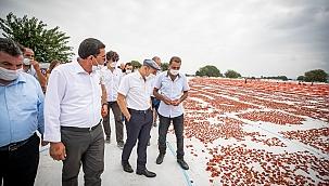 İzmir'de Tarımsal Üretim Faaliyetleri Artıyor