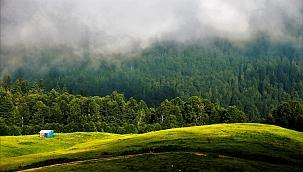 Ormanlar Yaşamın En Temel Parçası Oldu