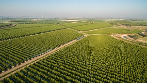 Akıllı Tarımla Sağlıklı Meyveler Üretilecek