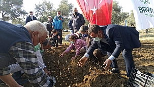 İzmir'de Nergis Üretimine Sürdürülebilirlik Sağlanacak