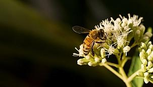 Arıların Hayranlık Uyandıran Dünyası