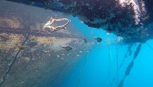 Bazı Egzotik Balık Türleri İlk Kez Görüntülendi