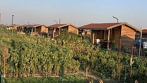 Menderes'te 5 Bin hobi bahçesi yıkılacak